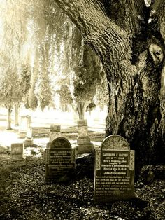 hillside cementary redlands | hillside memorial park cemetery redlands, ca 2013