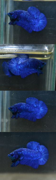 Super Blue full mask