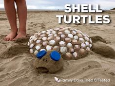 Family Day, Turtle, Shells, Beach, Crafts, Conch Shells, Turtles, Manualidades, The Beach