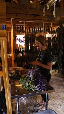 How to Harvest Lavender by The Lavender Apple Farm