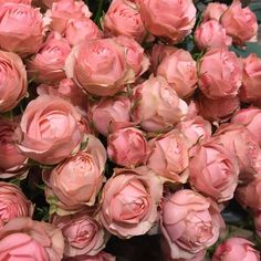 Our goal is to keep old friends, ex-classmates, neighbors and colleagues in touch. Little Flowers, My Flower, Flower Power, Pink Flowers, Beautiful Flowers, Flower Aesthetic, Pink Aesthetic, Bloom Baby, Language Of Flowers