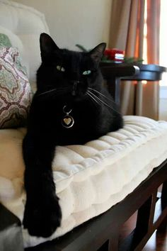 If you have a Black Cat, you are Very Lucky, indeed. All Black Cat, Cute Black Cats, White Cats, Black Kitty, Crazy Cat Lady, Crazy Cats, Cat Boarding, Beautiful Cats, Cute Kittens
