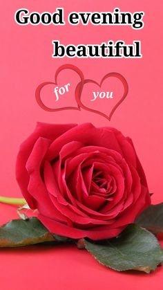 Good Evening Messages, Gd, Good Night, Beautiful, Nighty Night, Have A Good Night