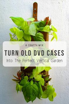 How clever. Old DVD cases have been re-purposed to make a beautiful vertical garden Dvd Case Crafts, Cd Crafts, Recycled Cds, Repurposed, Common House Plants, Gutter Garden, Types Of Vegetables, Bottle Garden, Hanging Pots