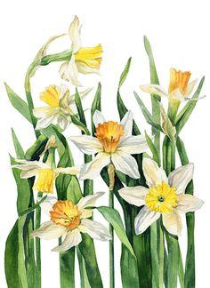 peony print on Behance Watercolor Print, Watercolor Illustration, Watercolor Flowers, Watercolor Paintings, Botanical Flowers, Botanical Prints, Art Floral, Rock Flowers, Fruit Painting