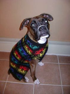 """Re-purposed """"Bill Cosby"""" sweater for your best buddy! I love it!"""