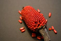 seed head of a Arisaema concinnum ~ by Thirties2007Berry