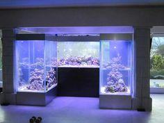 wall tank reef saltwater tank