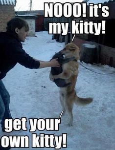 - Funny Animal Quotes - - Fun Claw Funny Cats Funny Dogs Funny Animals: Funny Animals 20 Pics The post Nooo! appeared first on Gag Dad. Funny Animal Quotes, Animal Jokes, Funny Animal Pictures, Cute Funny Animals, Cute Baby Animals, Funny Cute, Cute Cats, Funniest Animals, Animal Captions