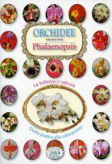 Orchidee - Phalaenopsis