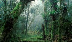 11/20/2015 - SHOCK WARNING: 8,690 tree species in Amazon on verge of becoming EXTINCT - MORE than half of the 15,000 species of tree found in the Amazon rain forest are now on the brink of extinction, it has been revealed.