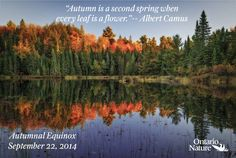"""Today marks the first day of Fall """"Autumn is a second spring when every leaf is a flower. Autumnal Equinox, Albert Camus, Ontario, Leaves, Mountains, Words, Spring, Fall, Nature"""