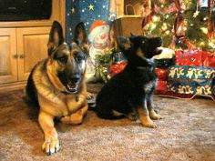 german shepherd christmas |