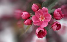 high resolution wallpapers widescreen blossom  by Cartwright Holiday (2017-03-15)
