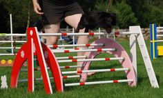Rabbit Hopping & Rabbit Agility: Interactive Sports for You & Your Rabbit
