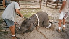 Stop the cruel use of animals in your circus