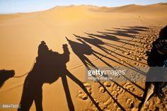 animal shadows - Google Search