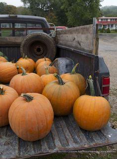 """""""Pumpkin Sale"""" by Chris Waters  www.studiowaters.net"""