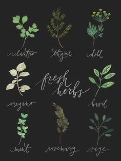 18 x 24 Fresh herbs poster chart by julietgracedesign on Etsy, $45.00