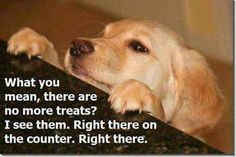 This is so my Sam .. if I have any food while I'm sitting at the desk he is tall enough that he can see over the top .. he's a terror for food