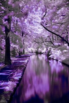Purple Forest View - Pantone Color of Year 2018! Purple   Home Decor   Summer Decor   Purple Summer Home Decor   Photography   Summer Maternity Style   Purple   Purple Bridal Earrings   Inspirational   Beautiful   Decor   Makeup    Bride   Color Scheme   Tree   Flowers   Great View   Picture Perfect   Cute   Candles   Table Centerpiece   Purple Themed   Purple Desserts   Purple Flowers   Purple Table Decor   Purple Roses   Love   Purple Scheme   Purple Wedding Decor   Wedding Table Idea…
