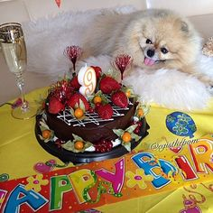 My dear friends and followersthank you so much for all the Birthday wishes!Very very pleasantly! You are really awesome! I love all of our  wonderful big IG family! #Egis #ёгис  #animalsfocus #animlslife #insta_animal #wonderful_earthpix #animalsshot #adorable_animals #my_loving_pet #excellent_animals #my_pet_feature #animaladdicts #dogs_of_instagram #pets_of_instagram #worldofcutepets #7pets_1day  #puppies_x_dogs #lacyandpaws #pomeraniandogs #barkbox #petsuniversal #pommylovers #feature_do2…