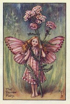 Princesa Nadie: Las hadas de las flores de Cicely Mary Barker                                                                                                                                                      Más