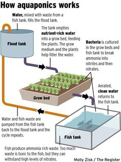 Aquaponics description. This makes a lot of sense explained like this! Can't wait till we set up our rainbow trout tank and get this going!