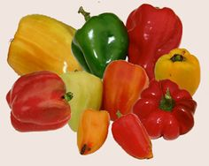 Sweet peppers come in a rainbow of colors and shapes. Stuffed Sweet Peppers, Life Is Good, Rainbow, Shapes, Rustic, Make It Yourself, Canning, Vegetables, Colors