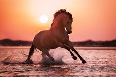 tickled-fancy - Sharron Davison A kingdom for a horse All The Pretty Horses, Beautiful Horses, Animals Beautiful, Majestic Horse, Majestic Animals, Baby Horses, Wild Horses, Horse Photos, Horse Pictures