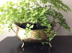 Textured Brass Planter with Feet by HazelRoberts on Etsy Brass Pot, Brass Planter, Planters, Texture, Silver, Etsy, Vintage, Surface Finish, Plant