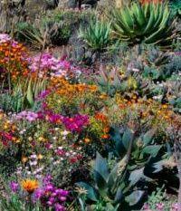 sapain, http://www.publispain.com/revista/seccion/jardineria/xerojardines_y_xerojardineria_plantas_para_ahorrar_agua.html