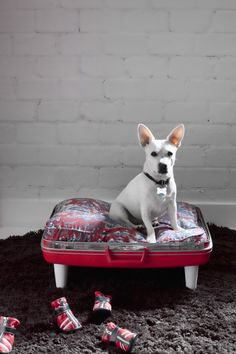 diy suitcase dog bed.  old idea, but this dog was too cute not to pin.