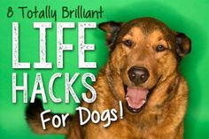 8 Totally Brilliant Life Hacks for Dogs | eBay