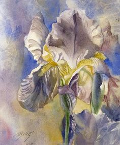 Iris With Blue-watercolor Painting by Alfred Ng