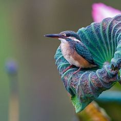 Johnson Chua is an active nature photographer based in Singapore that have been making waves lately. His other work (the kingfisher perching on a lotus leaf Small Birds, Little Birds, Colorful Birds, World Photography, Animal Photography, Pretty Birds, Beautiful Birds, Animals Beautiful, Common Kingfisher