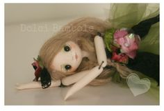 Dolci Bambole : Una ventata di aria fresca