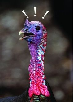 Gobble! Gobble! Happy Thanksgiving!  This is a real card (not an e-card). Send this card now.