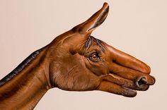 Handimals : Les animaux avec des mains de Guido Daniele : Olybop