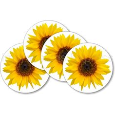 Sunflower Flower Photo Coasters  Set of 4 by ImpressionsExpress