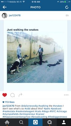 Just Taking My Snakes for a Walk - Nice Dogs - Biggest Snakes in the World ---- best hilarious jokes funny pictures walmart humor fail Animals And Pets, Funny Animals, Cute Animals, Haha, Pet Snake, Tier Fotos, Animal Memes, Funny Cute, Funny Man