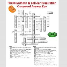 photosynthesis worksheet - Google Search | Cellular Energy ...