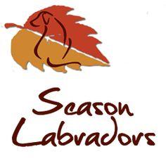 http://www.trovavetrine.it/seasonlabradors
