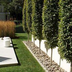 68 Simple DIY Backyard Privacy Fence Design Ideas - Page 41 of 66 Modern Landscape Design, Modern Garden Design, Backyard Garden Design, Garden Landscape Design, Modern Design, Desert Backyard, Modern Backyard, Large Backyard, Contemporary Garden