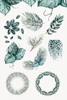 Watercolor Plants by Spasibenko Art on @creativemarket