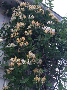 Kaprifol ❤️ West Coast Fishing, Green Plants, Garden Design, Pergola, Interior, Flowers, Room, Photos, Gardens
