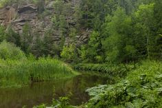 Waldviertel Before I Sleep, Miles To Go, Dog Walking, River, Dogs, Photography, Outdoor, Friendship, Woodland Forest