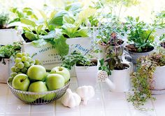 Got a sunny windowsill and a love for cooking? Try growing herbs indoors to use in your favorite dishes. Growing Herbs Indoors, Growing Vegetables, Tomato Plants, Garden Club, Artificial Plants, Garden Plants, Modern, Outdoor Living, Fragrance