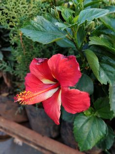 Flora And Fauna, Gardening, Animals, Plant, Lawn And Garden, Horticulture