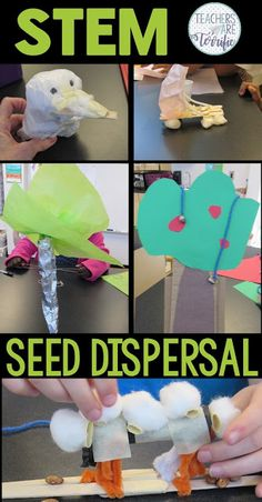 How to Make Seed Dispersal Hands-On - Teachers are Terrific Seed Dispersal, Stem Classes, Stem Science, Mad Science, Stem For Kids, Stem Challenges, Stem Projects, Science Lessons, Science Activities
